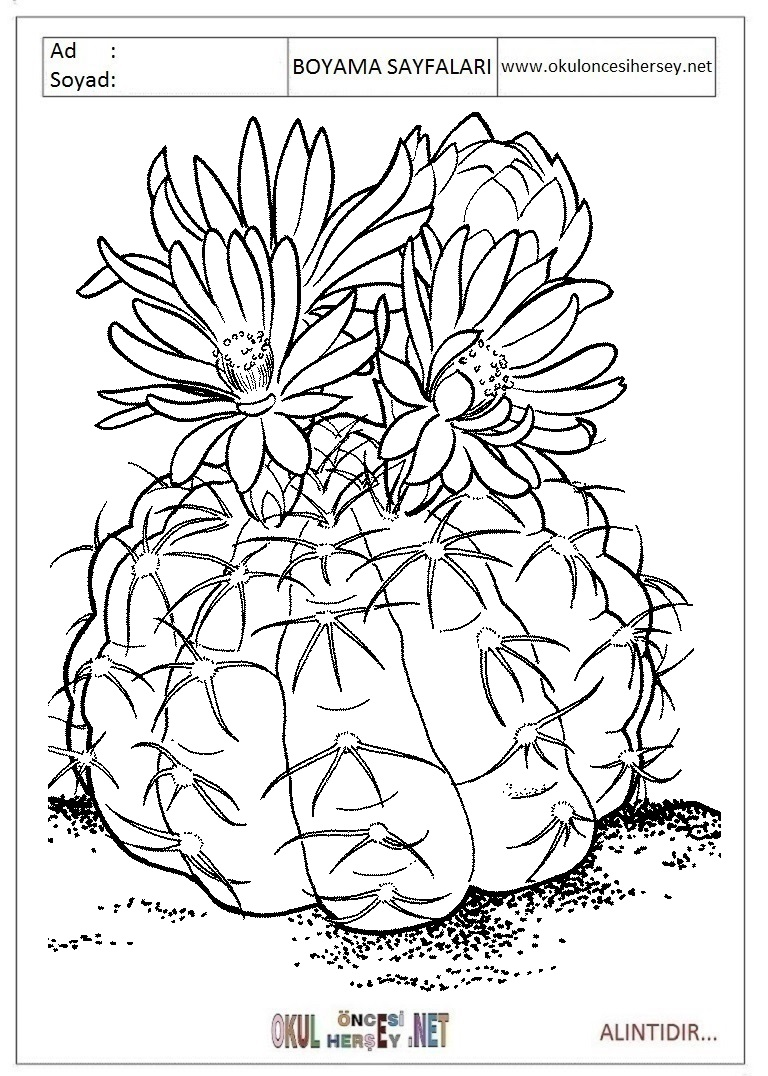 Kaktus Boyama Sayfalari