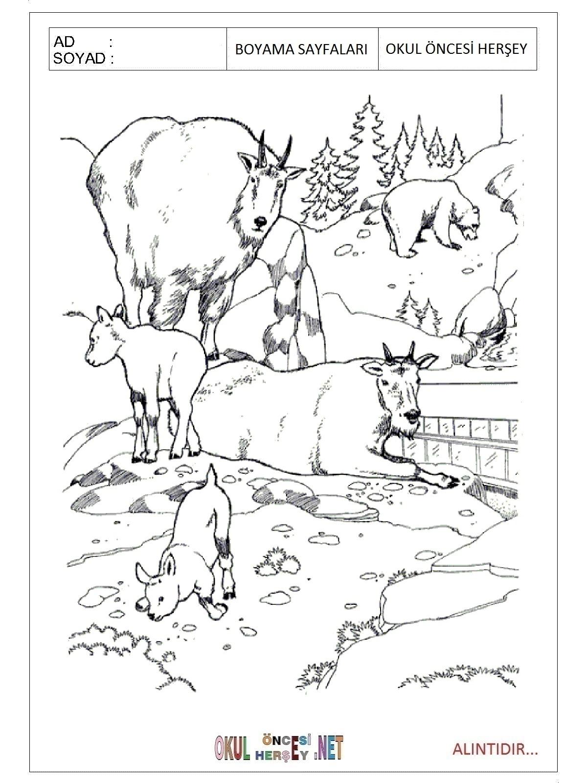Ormanda Yasayan Hayvanlar Boyama Sayfalari Yabani Hayvanlar