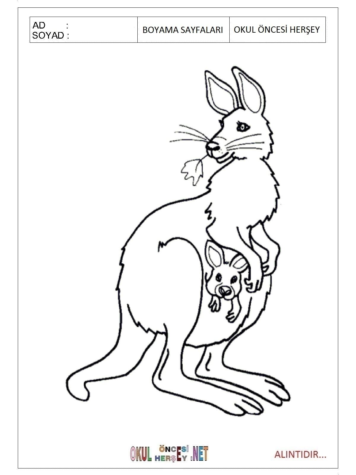 Kanguru Boyama Sayfalari