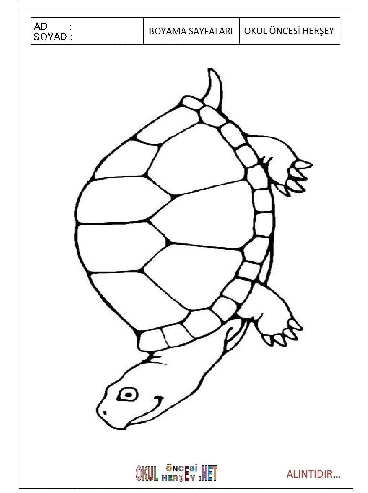Kaplumbaga Boyama Sayfalari