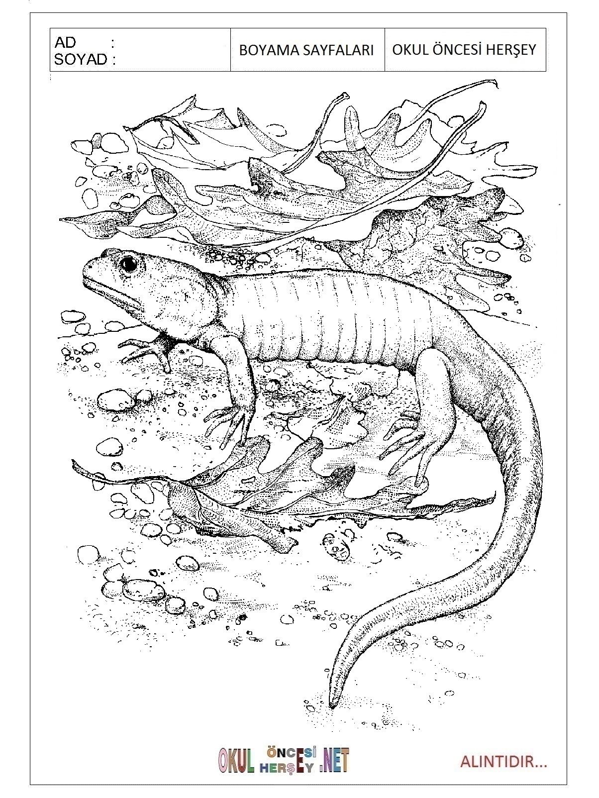 Kertenkele Boyama Sayfaları