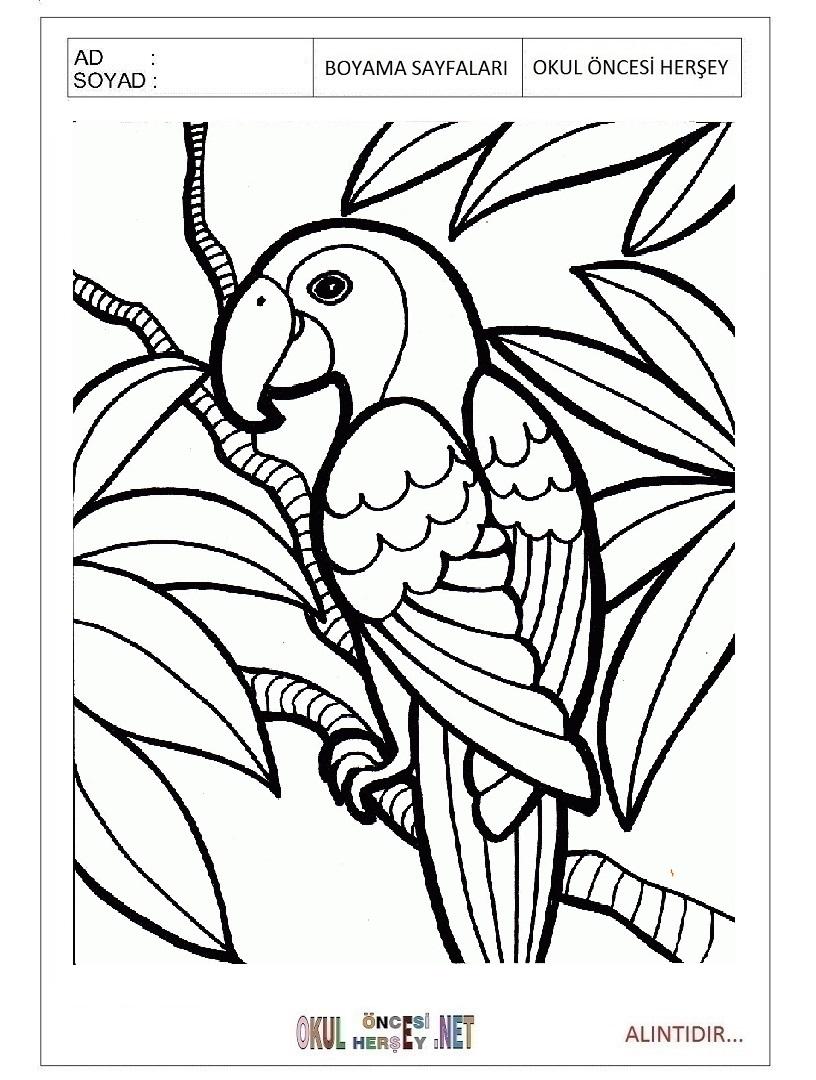 Papagan Boyama Sayfalari