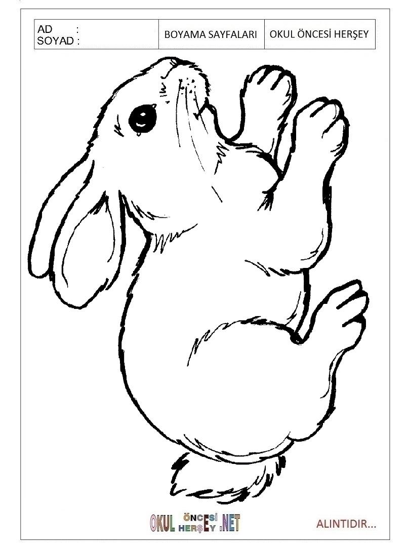Tavşan Boyama Sayfaları