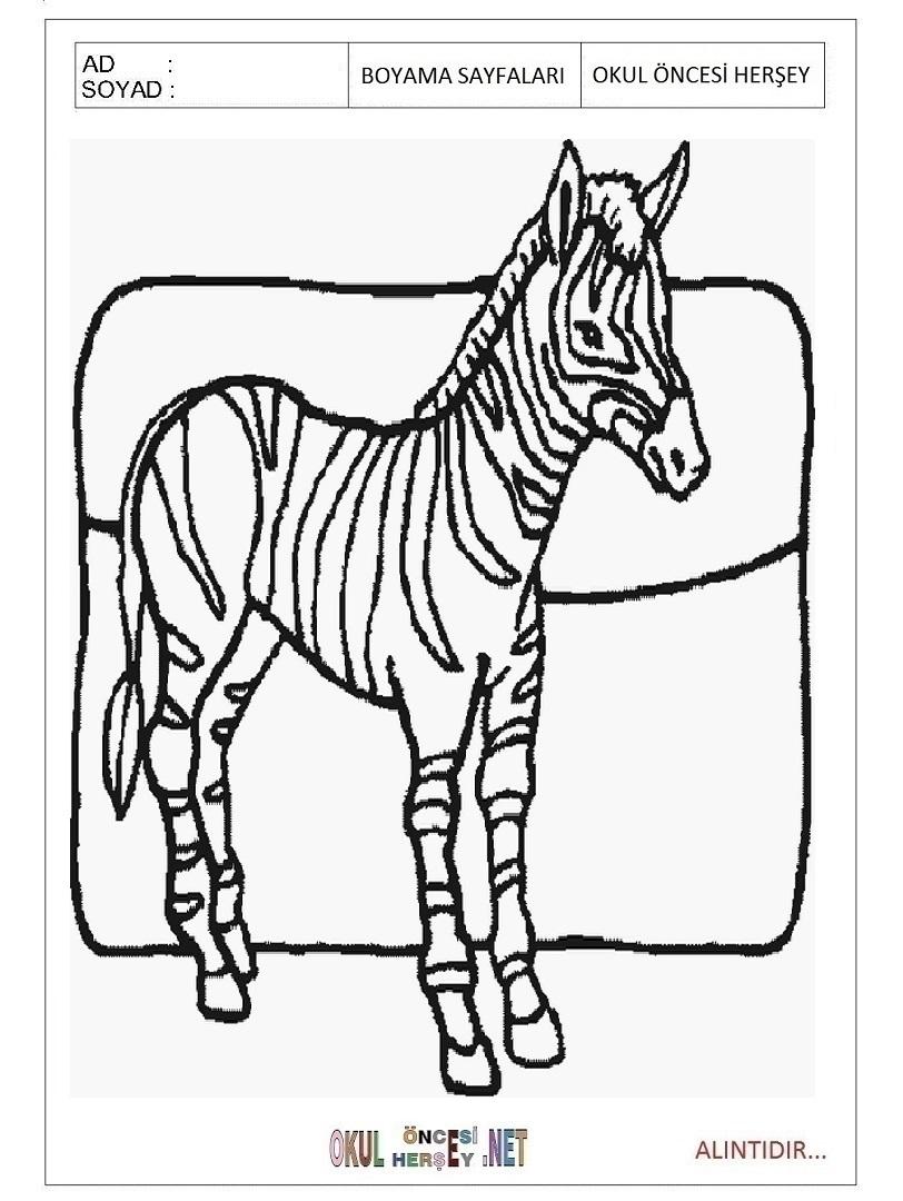 Zebra Boyama Sayfalari