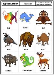 Hayvanlar eğitici kartları hayvanlar eğitici kartları hayvanlar