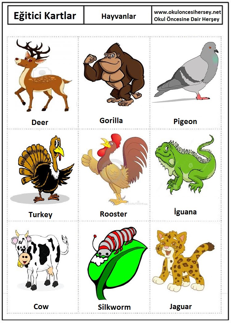 Ingilizce hayvanlar eğitici kartları