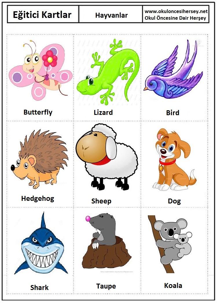 Hayvanlar Egitici Kartlar