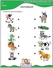 Hayvanlar Calisma Sayfalari